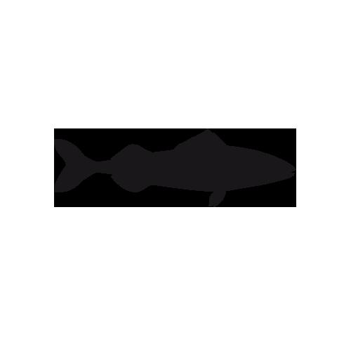 Kohlenfisch