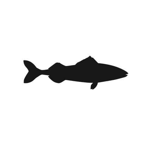 Black cod thumbnail